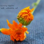 How to soothe sore nursing nipples: Ode to calendula oil