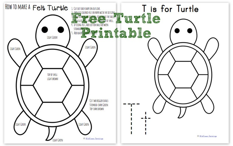 picture relating to Turtle Pattern Printable known as How in direction of crank out a Felt Turtle ABC Pets within Felt - Wildflower