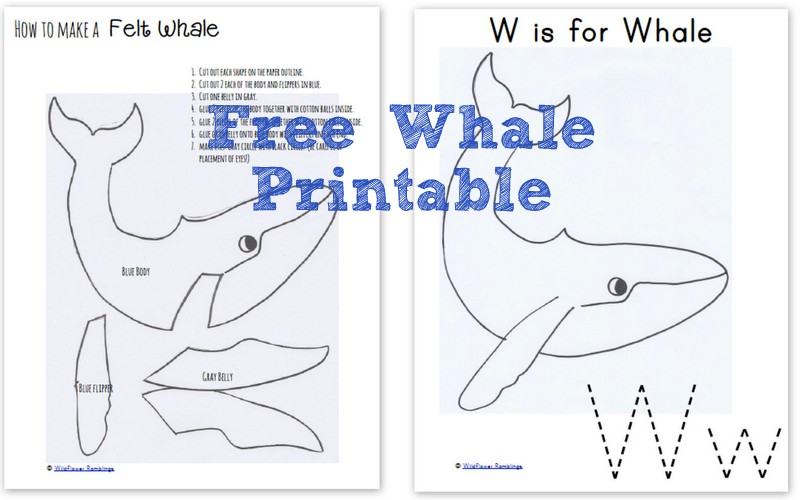 How to make a Felt Whale {ABC Felt Animals} from Wildflower Ramblings