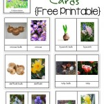 Spring Flower & Bulb Identification Cards {free printable!}