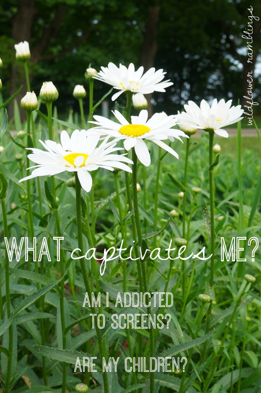 Are we too captivated by the screens in our lives? - Wildflower Ramblings