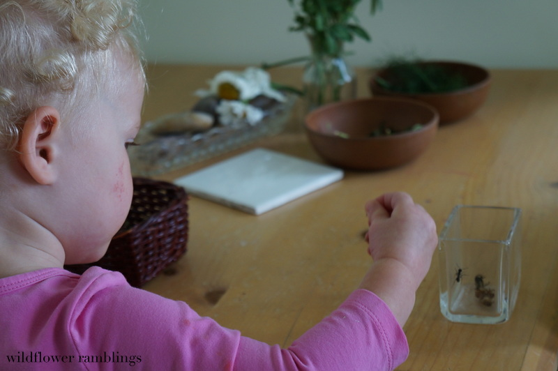 Reggio-inspired nature table - Wildflower Ramblings