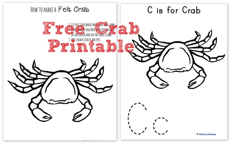 How to make a Felt Crab {ABC Felt Animals} - Wildflower Ramblings