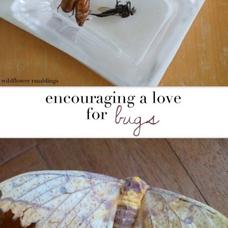 bugs and other critters