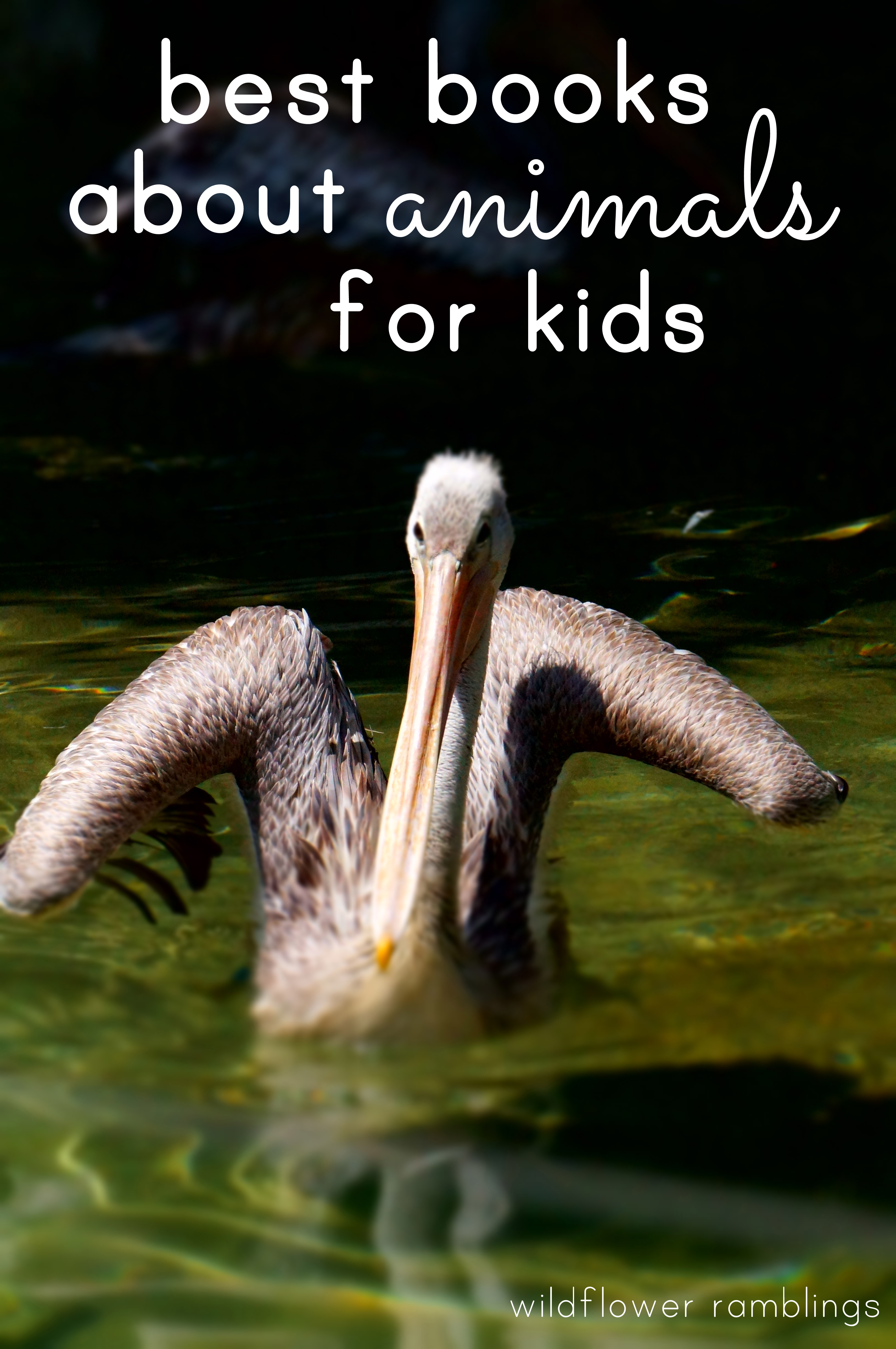 best books about animals for kids wildflower ramblings