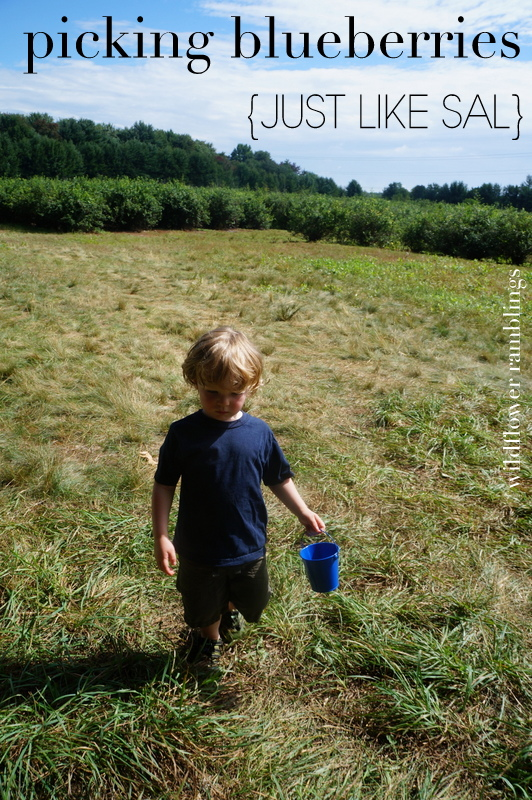 blueberries for sal day and activities - wildflower ramblings