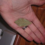 All I need…. is a bay leaf