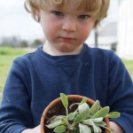 Paint a Pot & Plant a Plant