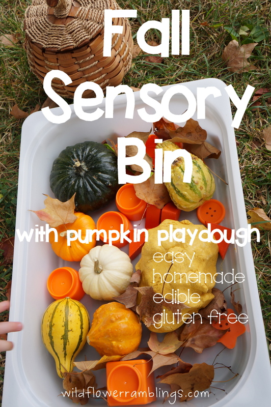 Fall Sensory Bin by Wildflower Ramblings
