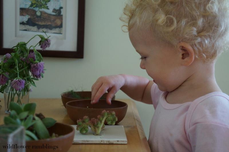 Reggio-inspired nature table - Wildflower Ramblings