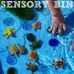 frog & turtle sensory bin