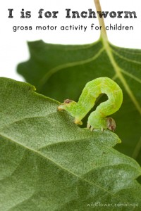 Macro of green inchworm on birch leaf