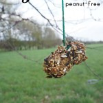 peanut-free DIY bird feeder